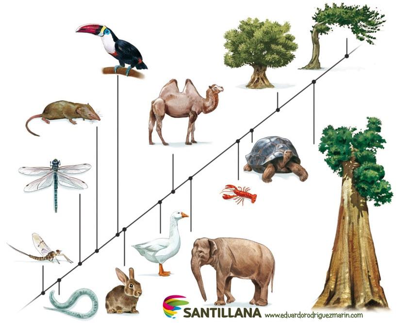 santillana 10