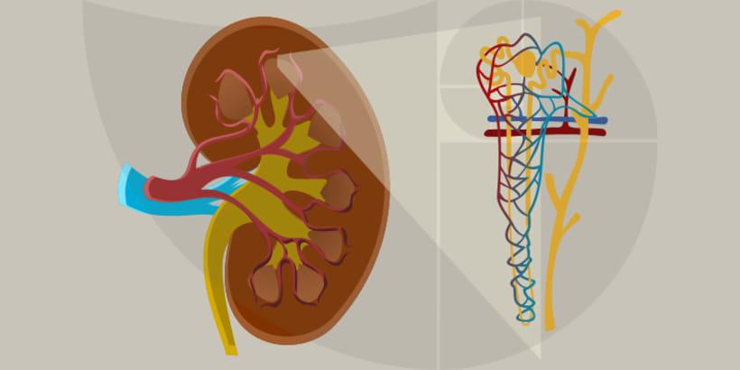 Ilustraciones para la ciencia y la educación 0