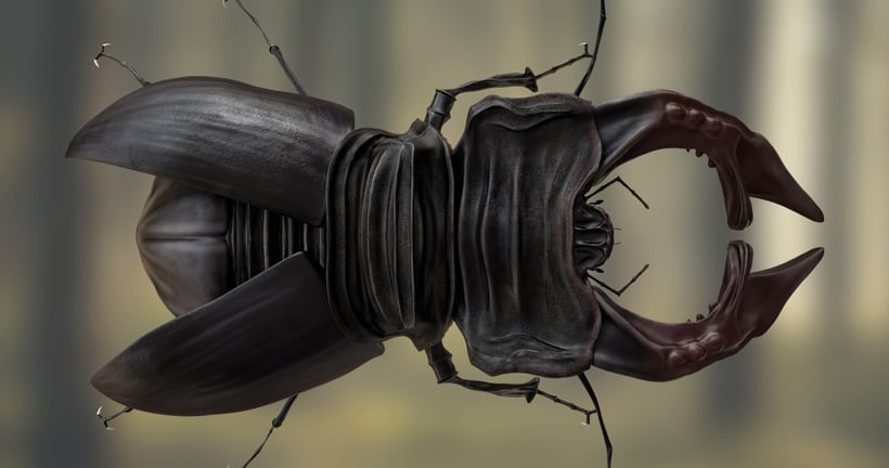 Deer beetle 0