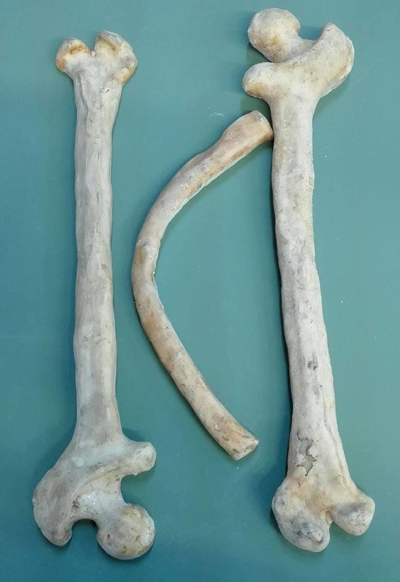 Props - huesos 1