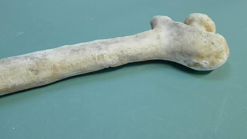Props - huesos 6