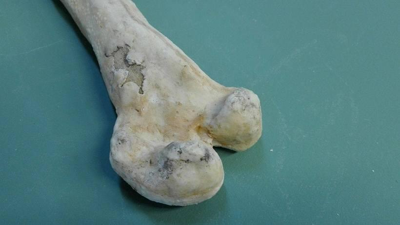 Props - huesos 4