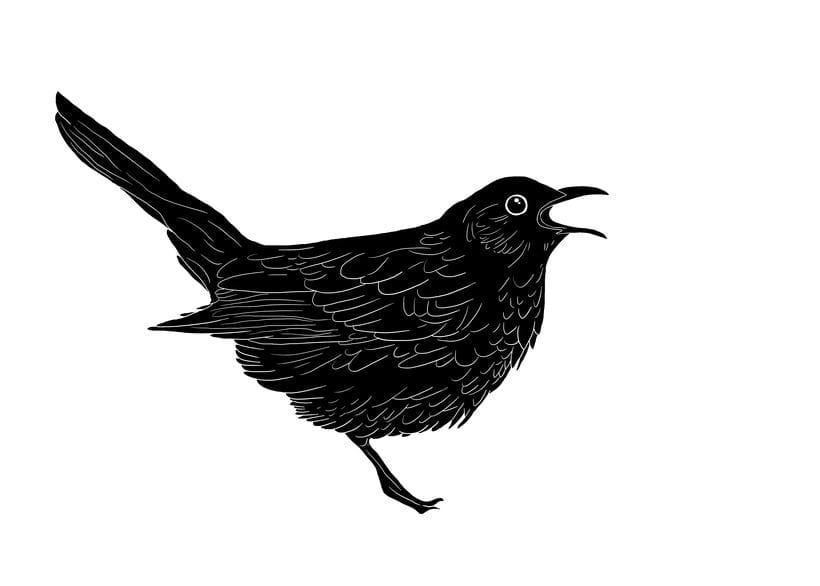 wine & birds 2