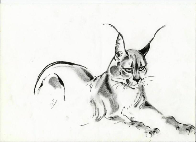Dibujando con sencillos lápices 7