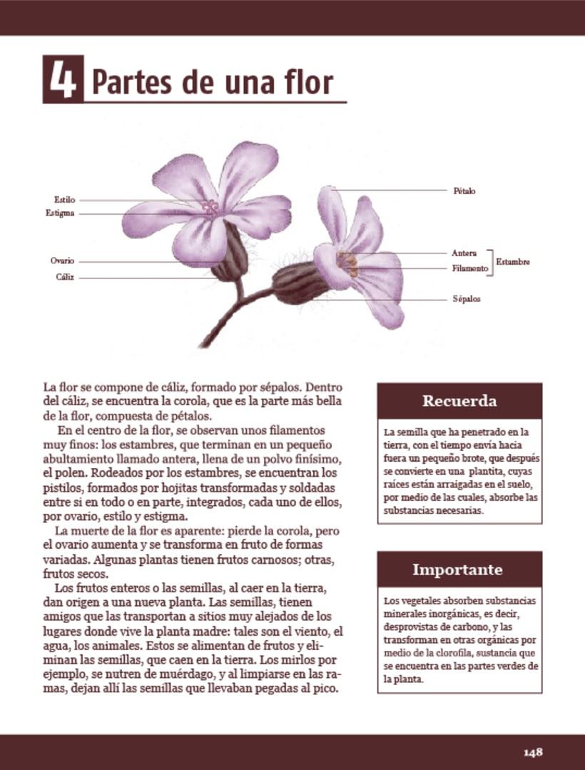 Ilustración científica - Geranio 2