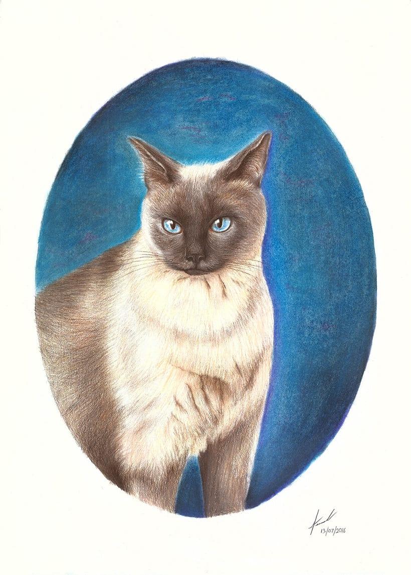 El gato Clemente -1