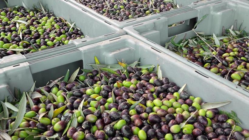 Sentos — Extra Virgin Olive Oil 2