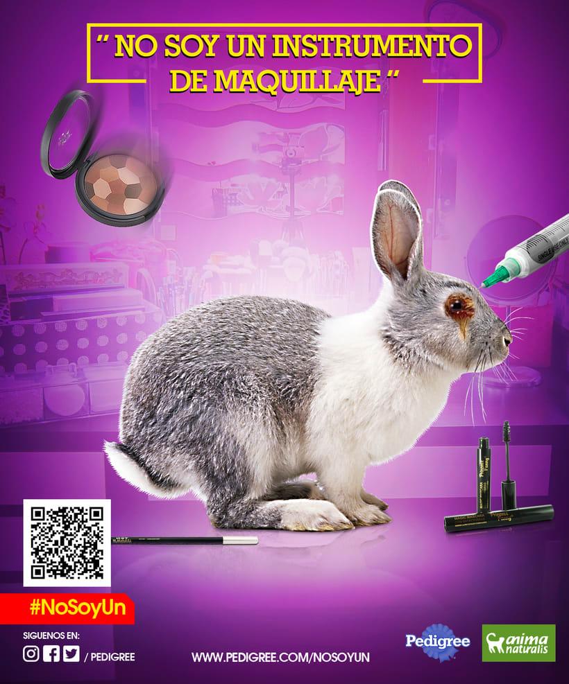 campaña contra el maltrato animal -1