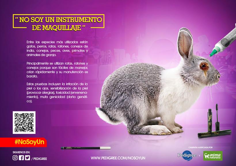campaña contra el maltrato animal 9