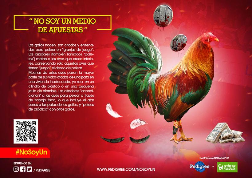 campaña contra el maltrato animal 10