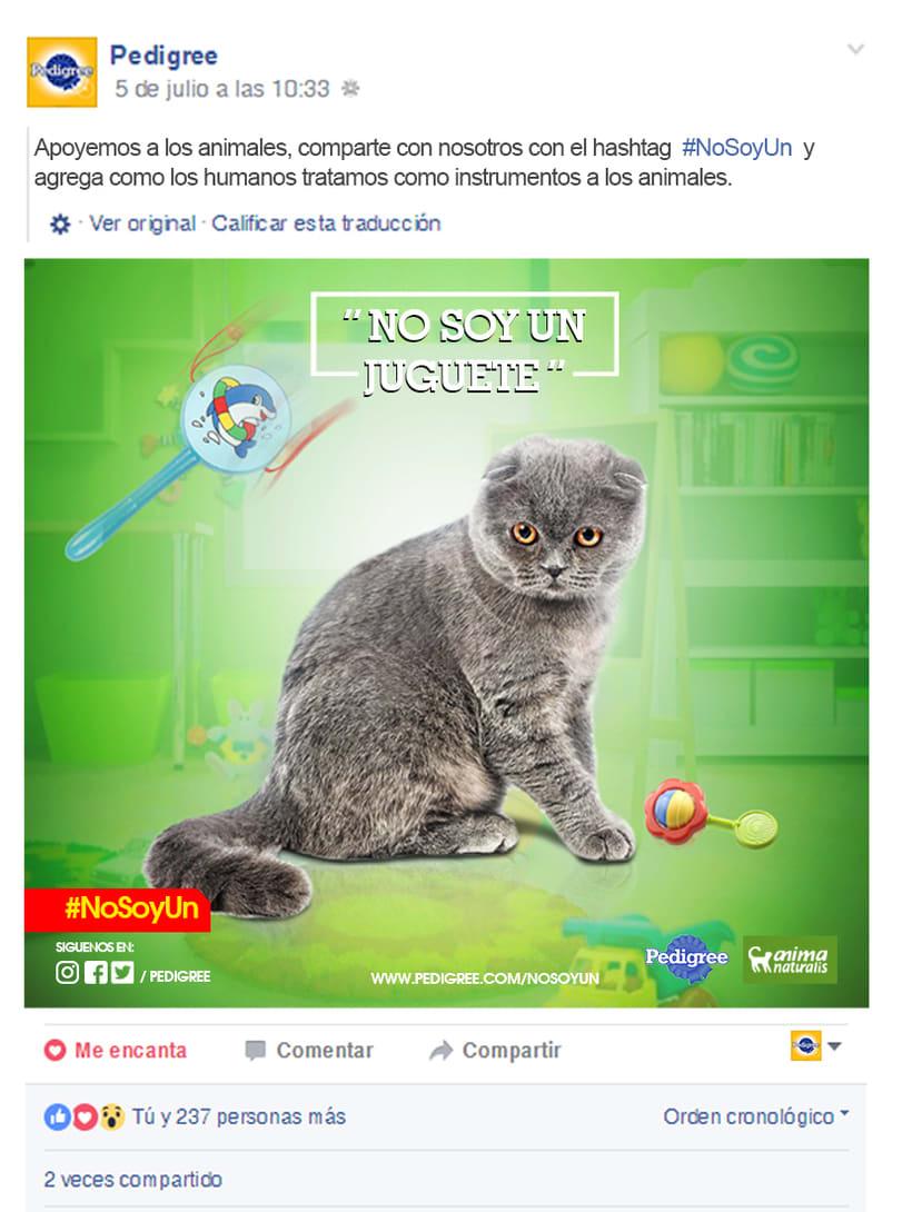 campaña contra el maltrato animal 16