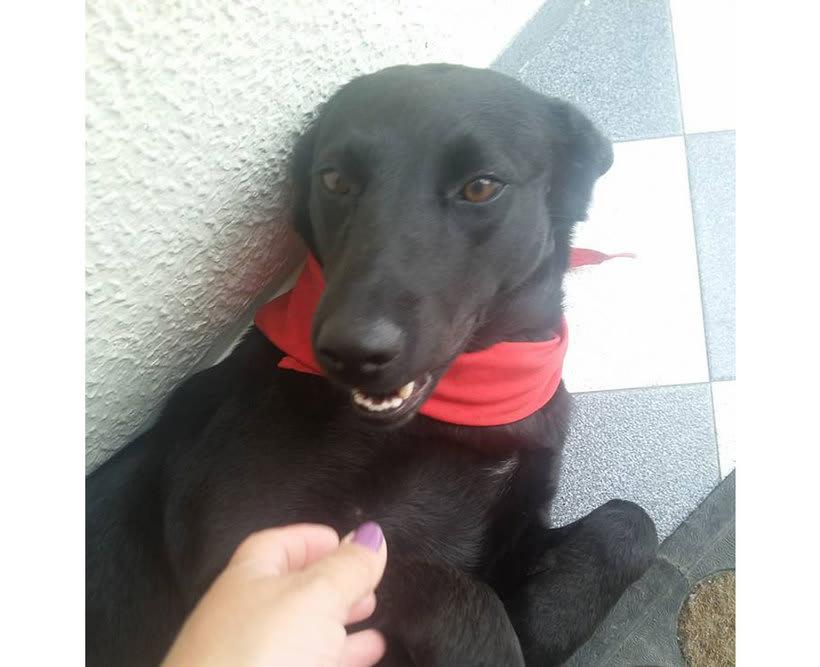 Adopción de Perros en Bogotá 0