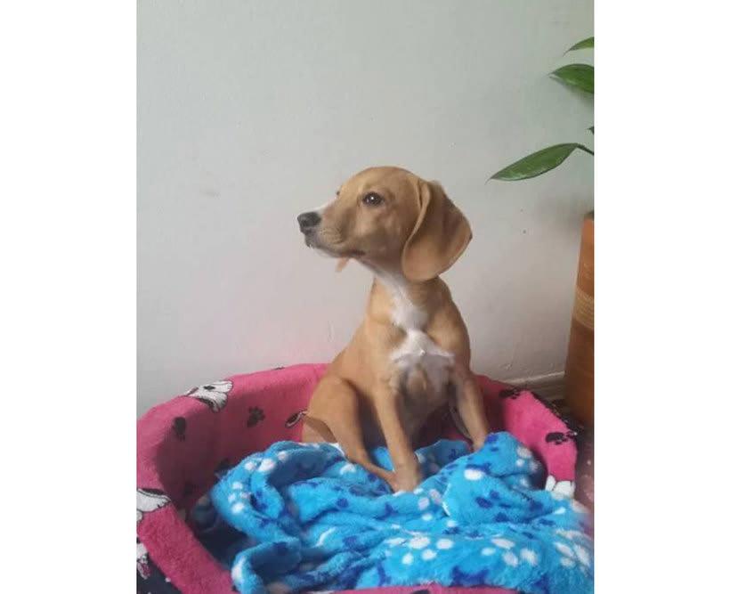 Adopción de Perros en Bogotá 1