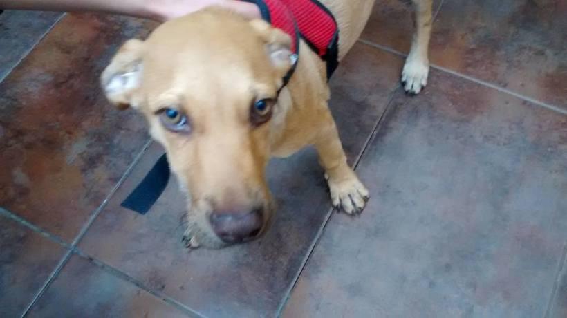 Adopción de Perros en Bogotá 2