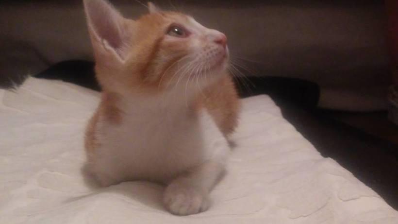 Adopción de Gatos en Bogotá 0