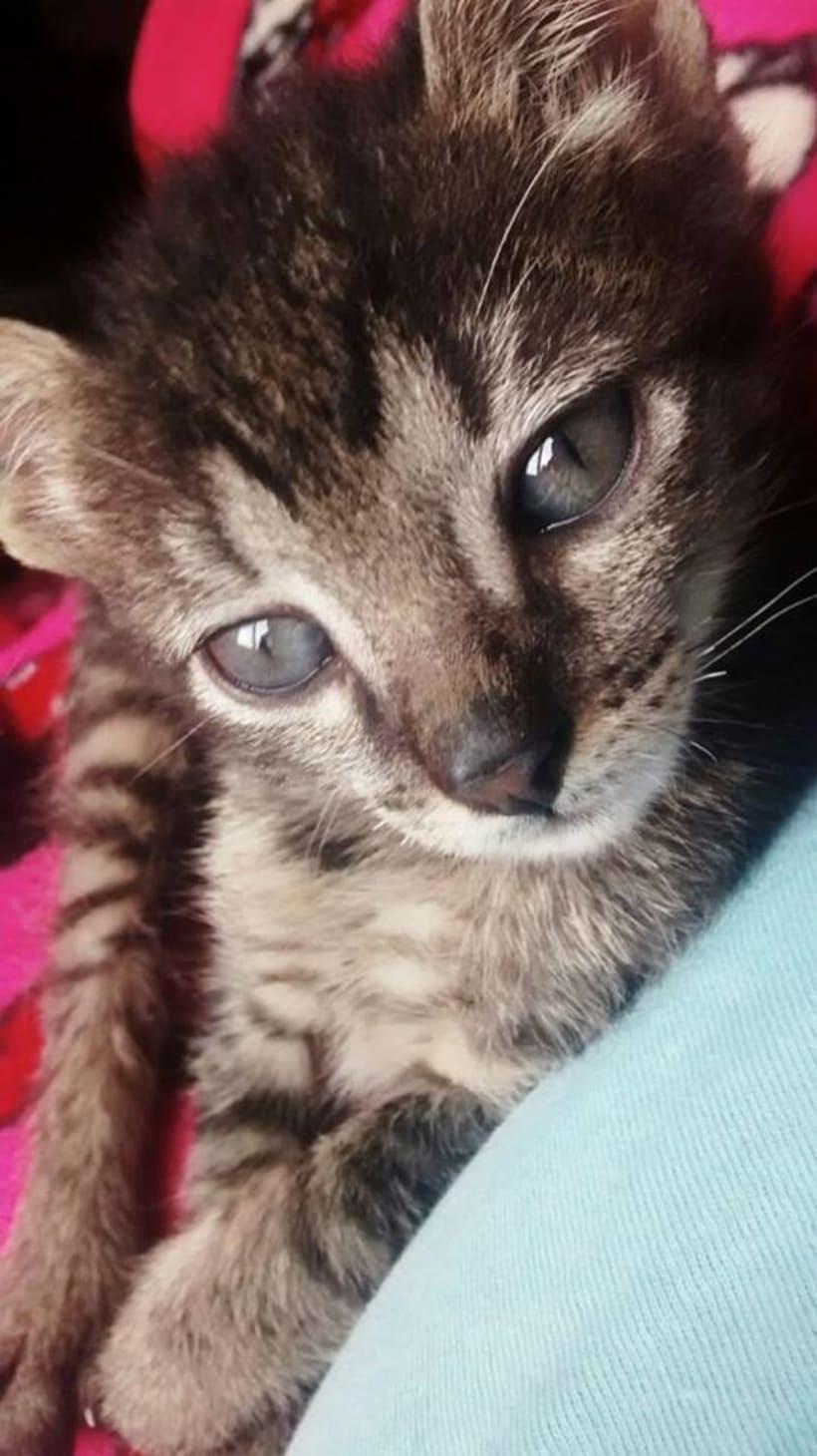 Adopción de Gatos en Bogotá 1