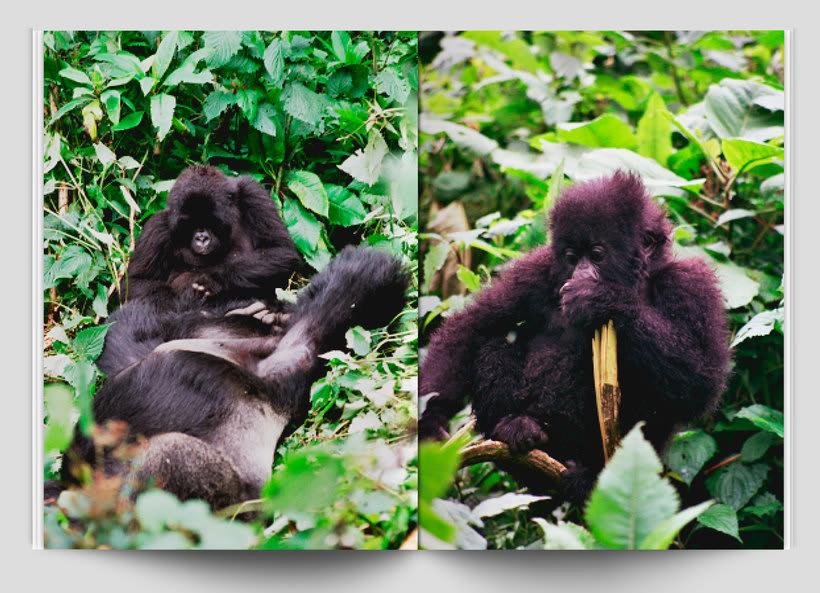 DVD Travel Rwanda 5