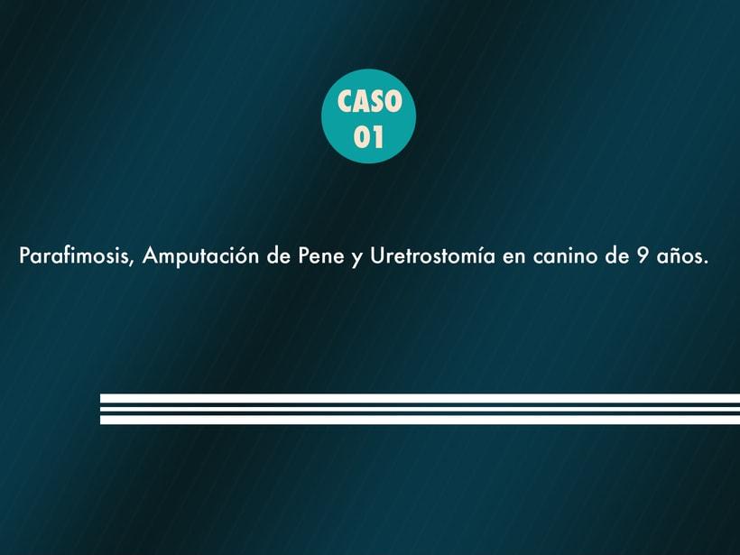 Presentación Tesis Univesitaria para futuro veterinario Copyright © Todos los Derechos Reservados -1