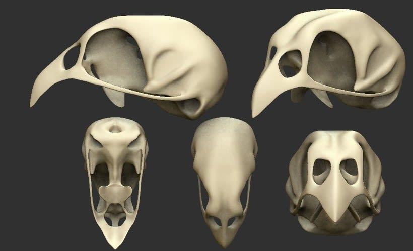 Cráneo de Priolo 1