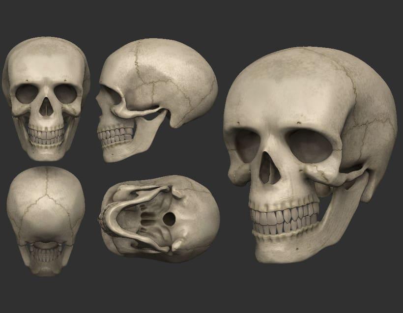 Cráneo Humano | Domestika