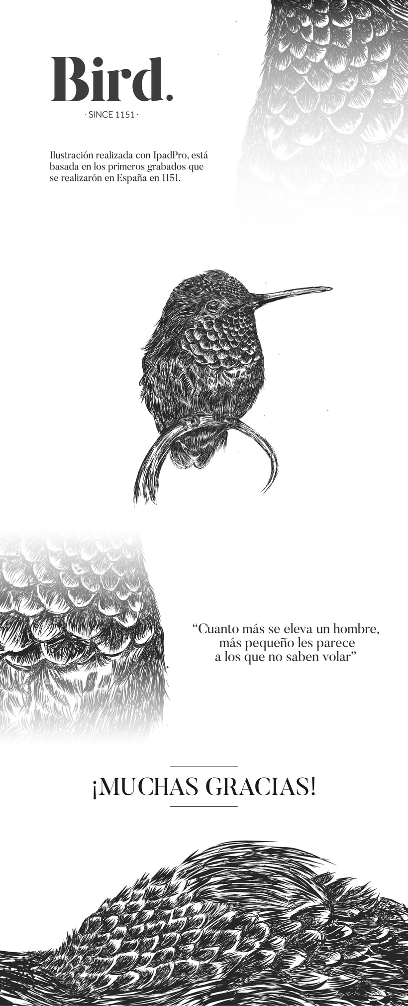 Bird. -1