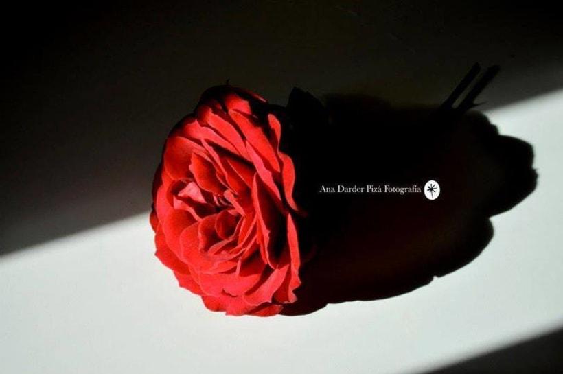Proyecto Personal_Elogio de la sombra* 6