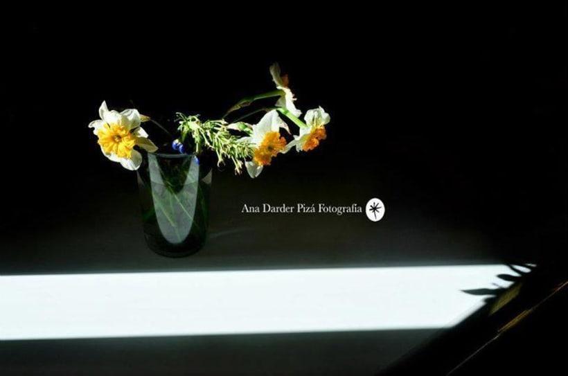 Proyecto Personal_Elogio de la sombra* 7