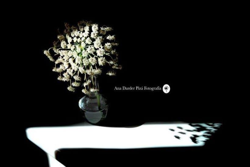 Proyecto Personal_Elogio de la sombra* 8