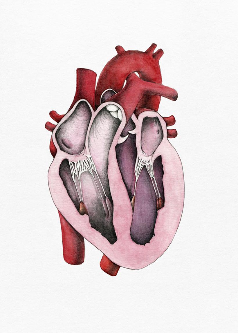 """""""Heart anatomy"""", un proyecto para Il·lustraciència 2"""