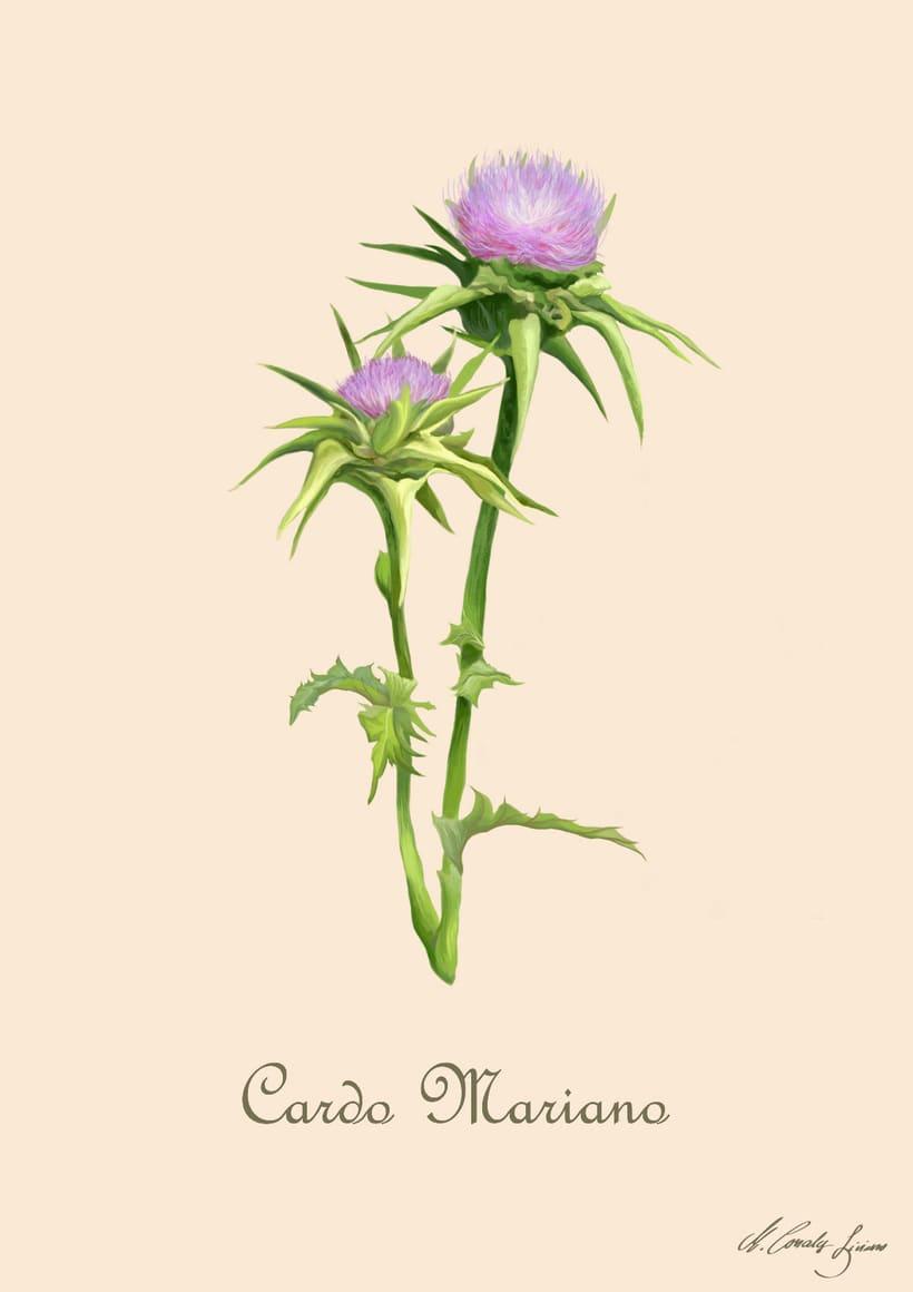 Plantas medicinales 7