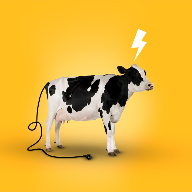 A Vaquiña polo que vale -1
