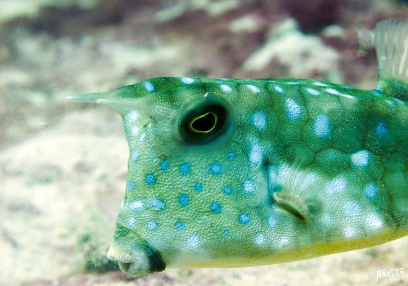 Underwater photography  0