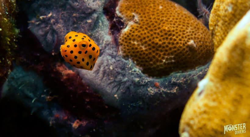 Underwater photography  6