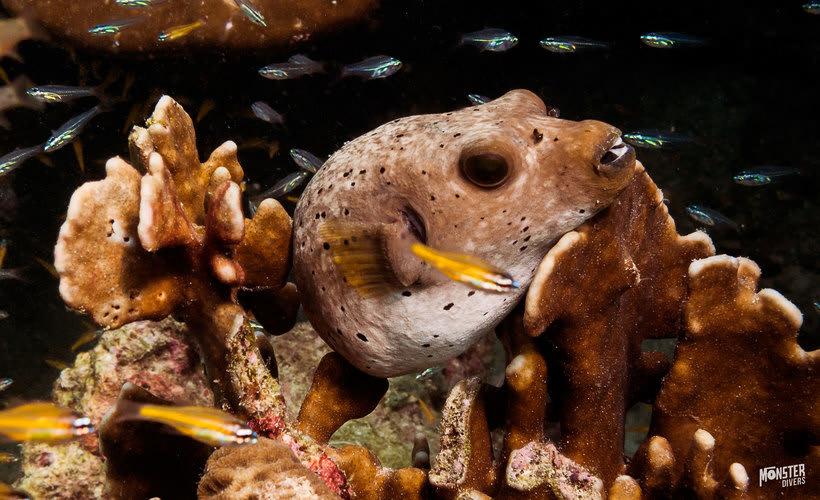 Underwater photography  8