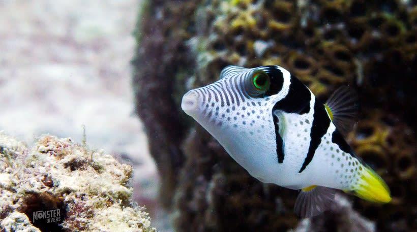 Underwater photography  9