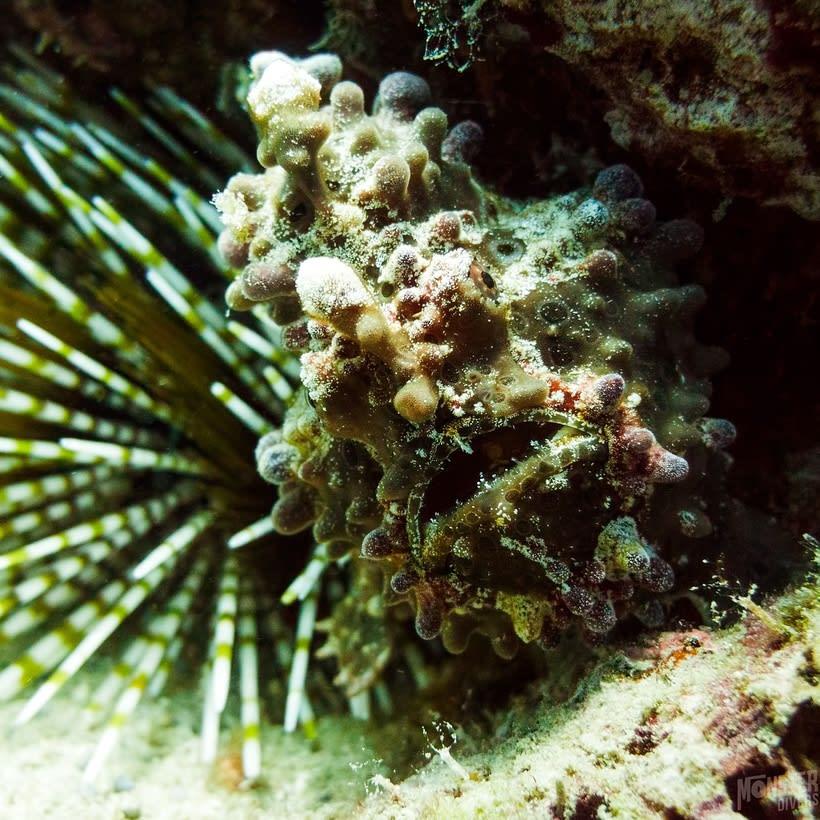 Underwater photography  10