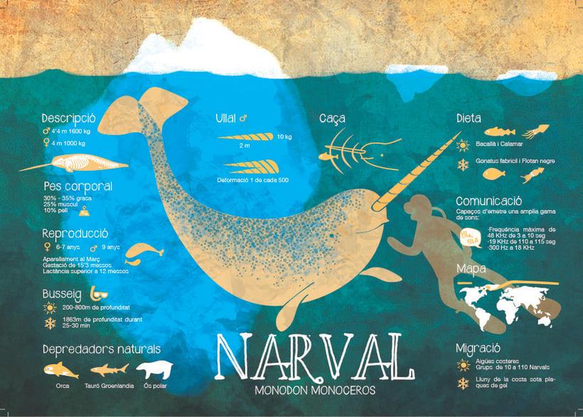 Narval -1