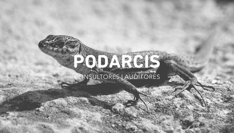 Podarcis 0