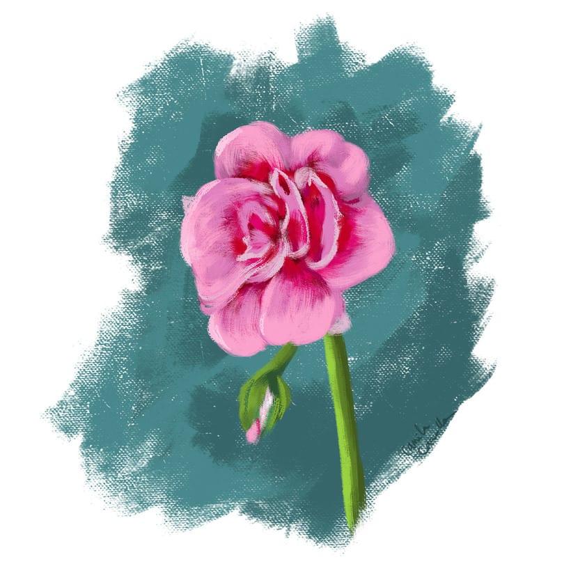 Flores: Estudio de color. -1