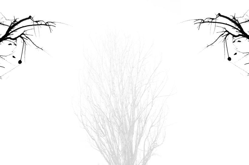 El Camino de la Dualidad 5