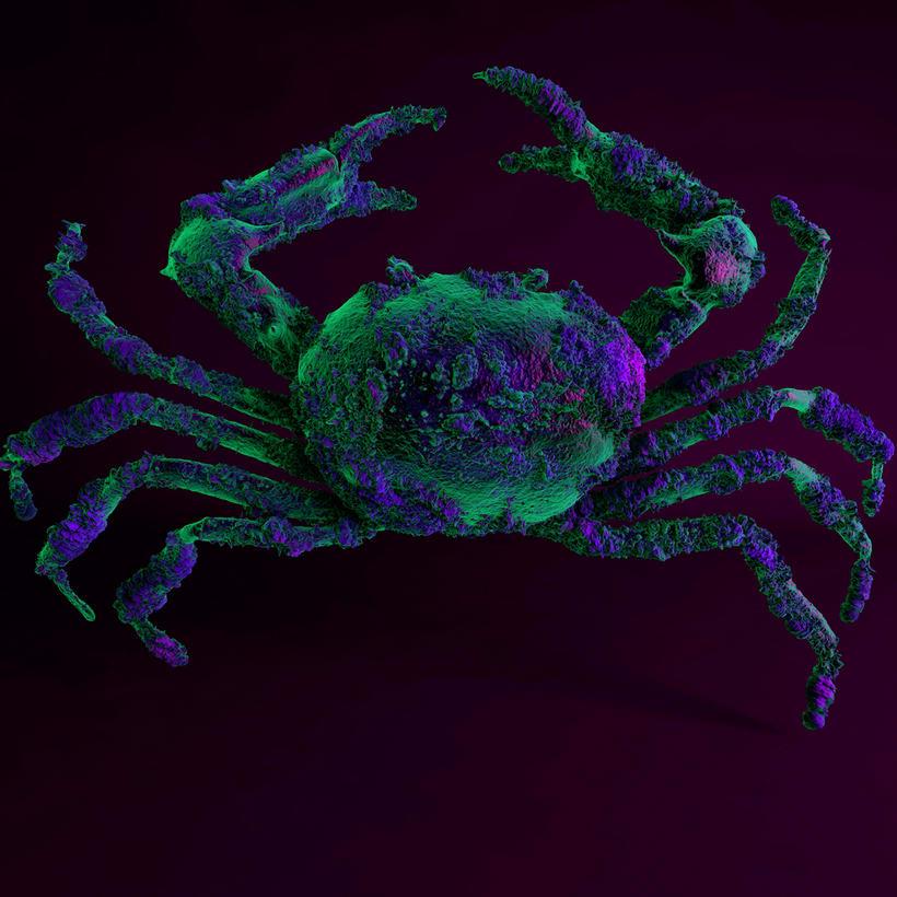 Crab -1