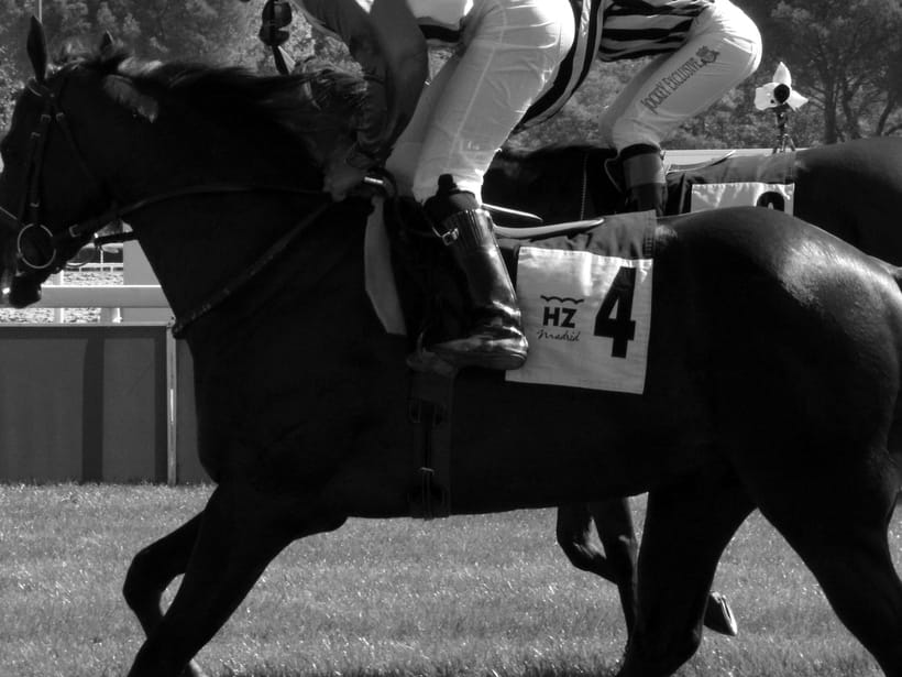 Horseraces -1