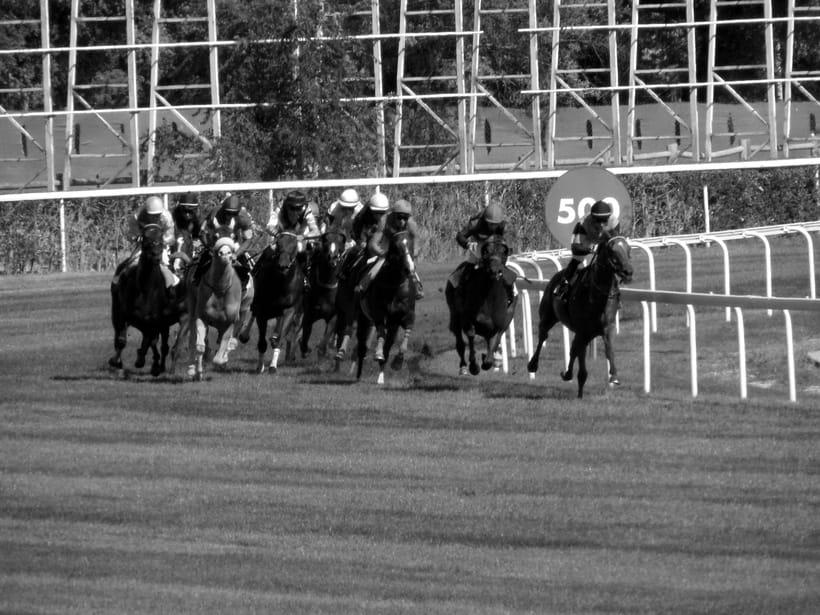 Horseraces 0