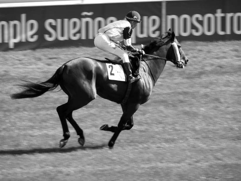 Horseraces 5