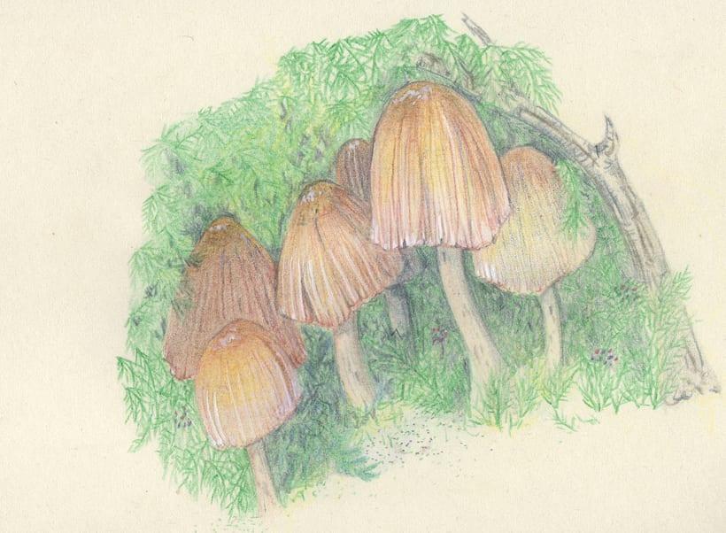 mushroom studies 0