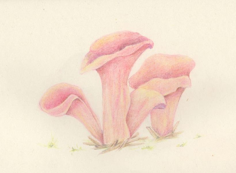 mushroom studies 2