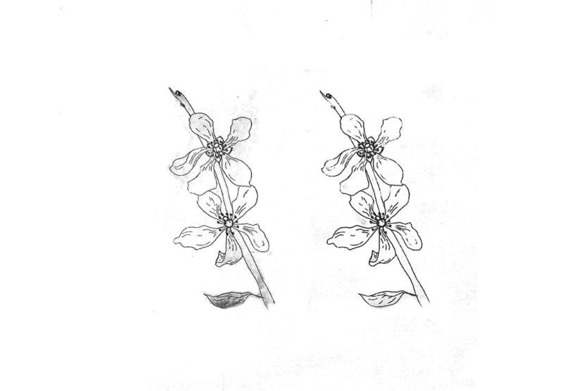 engraving 5