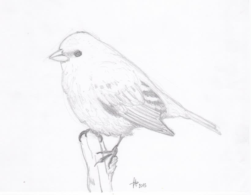 Ilustrando 4