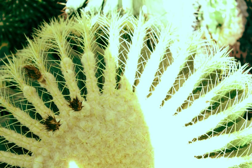 Botanika | Madrid 2