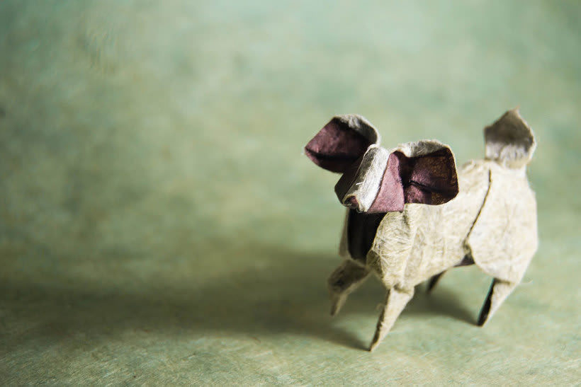 El zoológico de papel de Gonzalo Calvo 16